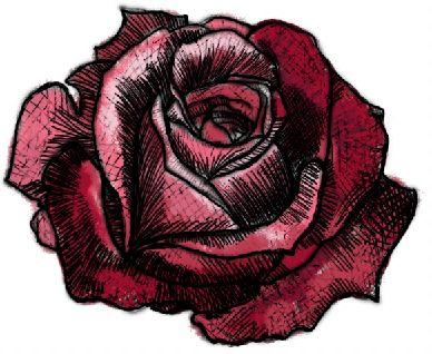 Drawn red rose Rose How #7 Rose rose