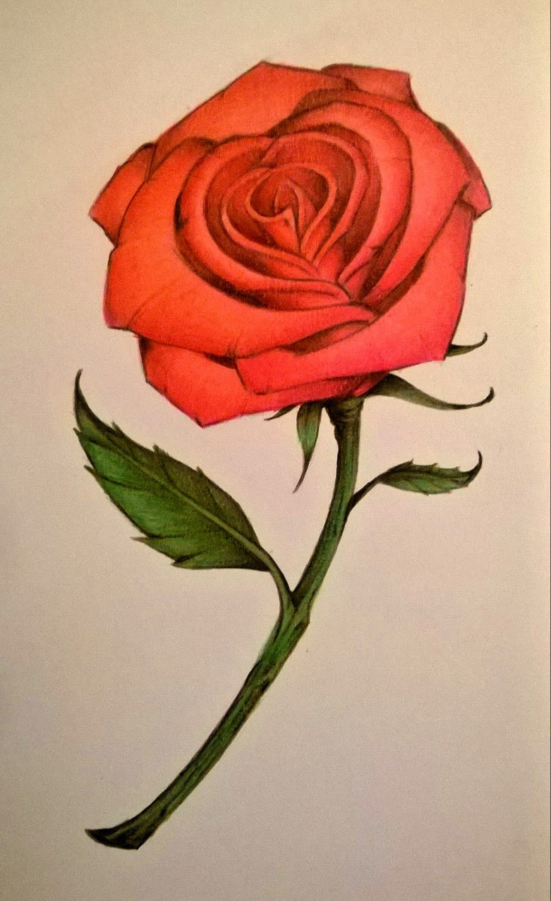 Drawn rose detail drawing Colored Rose Derrick How Rose