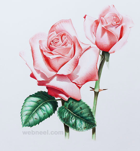 Drawn red rose animated For color jasmina Rose Paintings
