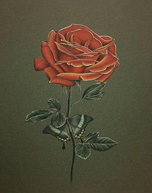 Drawn red rose art Drawing under Realistic hidding butterfly
