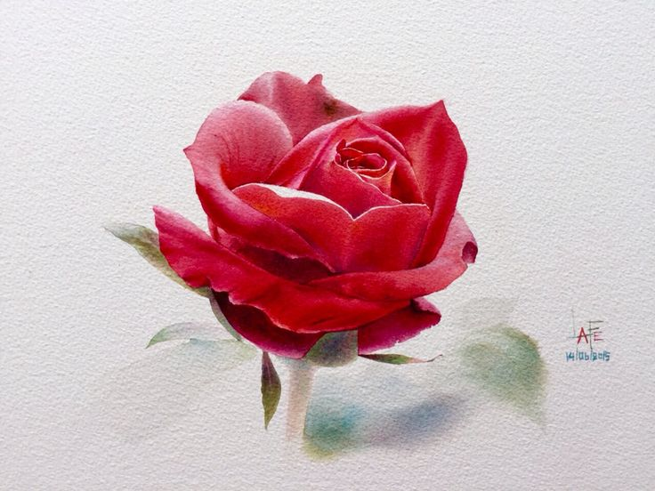 Drawn red rose art Pinterest  on ideas Drawing