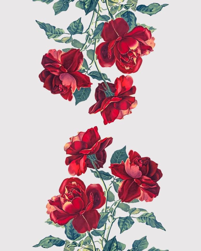 Drawn red rose art  Print Of Art Roses