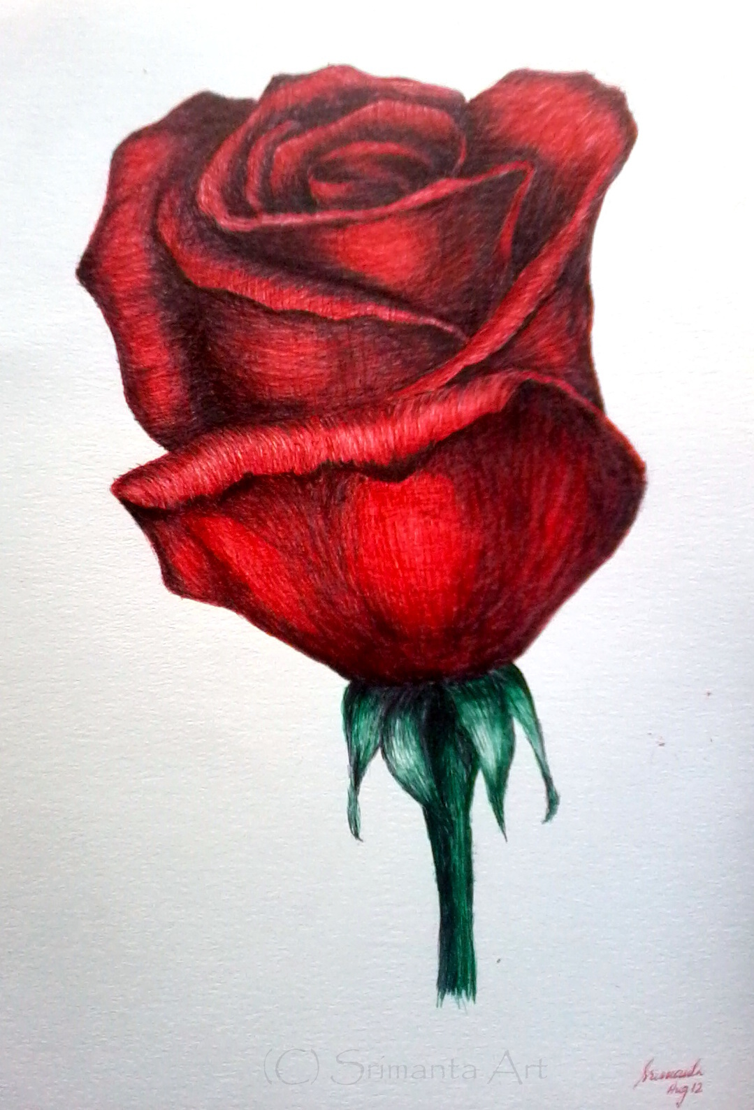 Drawn rose ballpoint pen And And Black Drawing Black