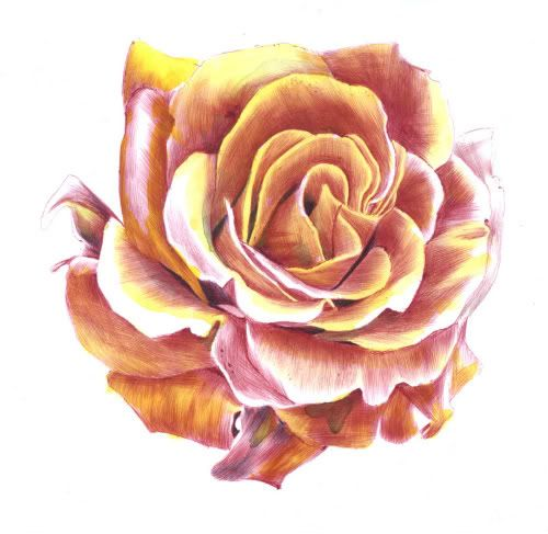 Drawn rose ballpoint pen на изображений Alexander в yellow