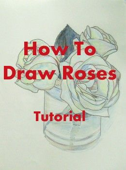 Drawn red rose base Step Best draw beginners How