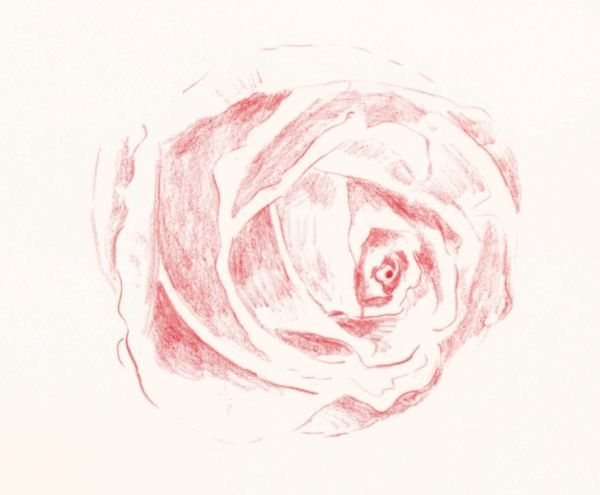 Drawn red rose base Draw  How Pencil in