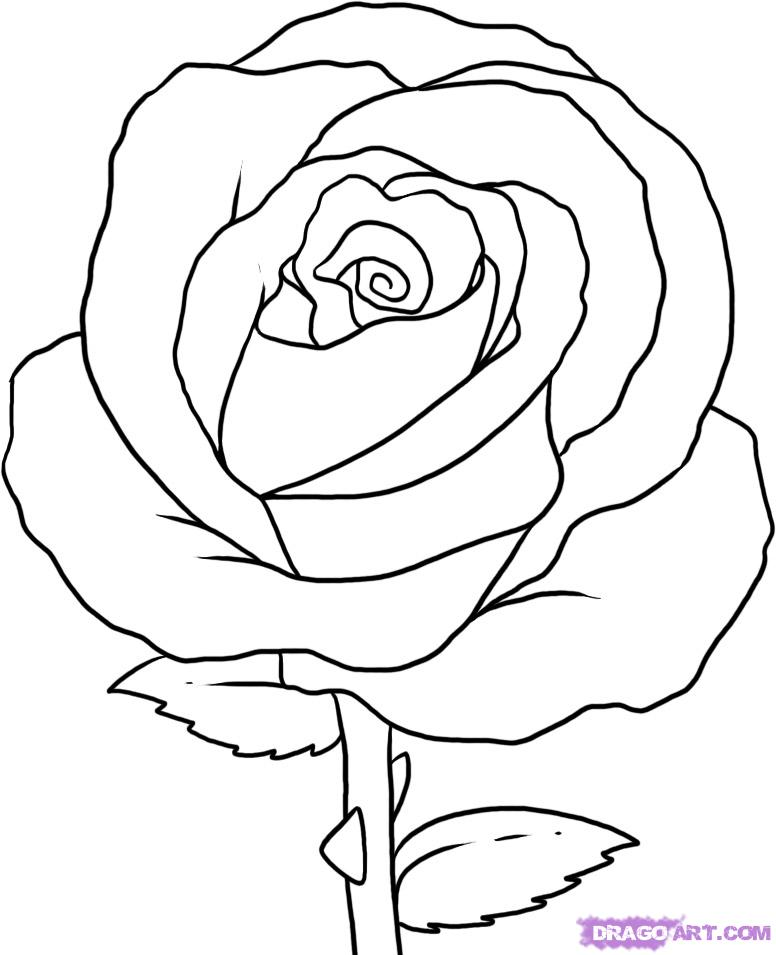 Drawn red rose basic Step to by simple Draw