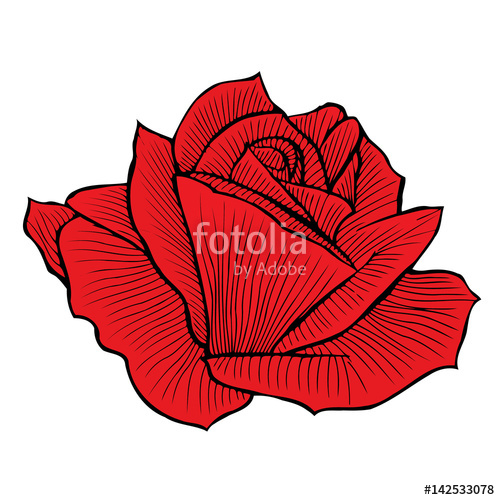 Drawn red rose basic Free and red  red