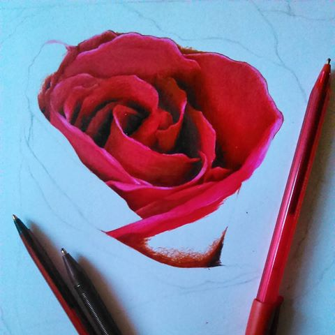 Drawn red rose biro And photos I've on but