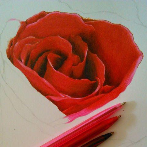 Drawn red rose biro Videos Today 235th Bryony #artsy