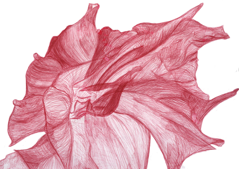 Drawn red rose biro Biro Rachel Rose Whitewood Red