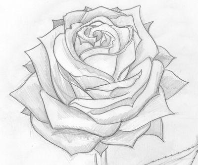 Drawn red rose biro How Pinterest Rose  Pencil