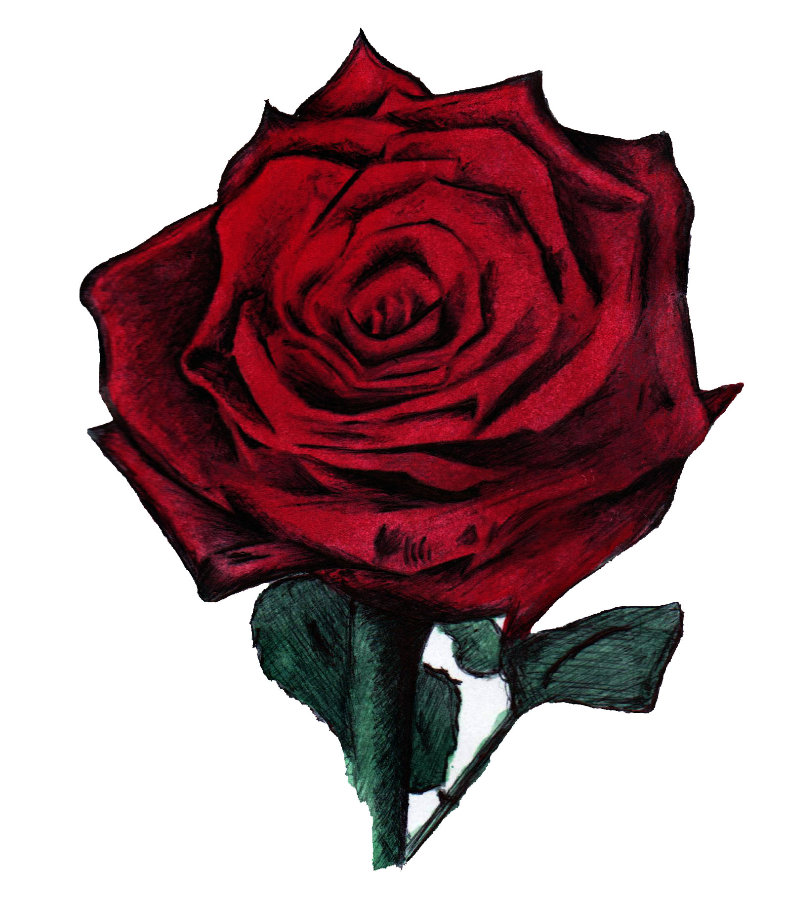 Drawn red rose biro Rose water to online and