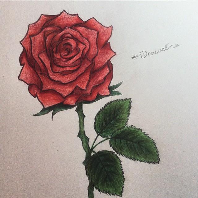 Drawn red rose biro Drawelinaxvii rose rose drawing Instagram