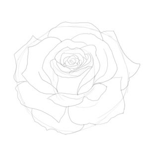 Drawn red rose black and white step by step Step Step Rose Step a