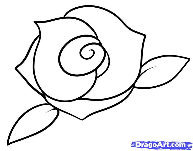 Drawn rose draw a Rose 25+ step easy Search