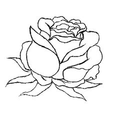 Drawn red rose black and white step by step How Search by  step