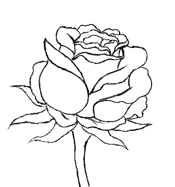 Drawn red rose black and white step by step Red to Step 9 How