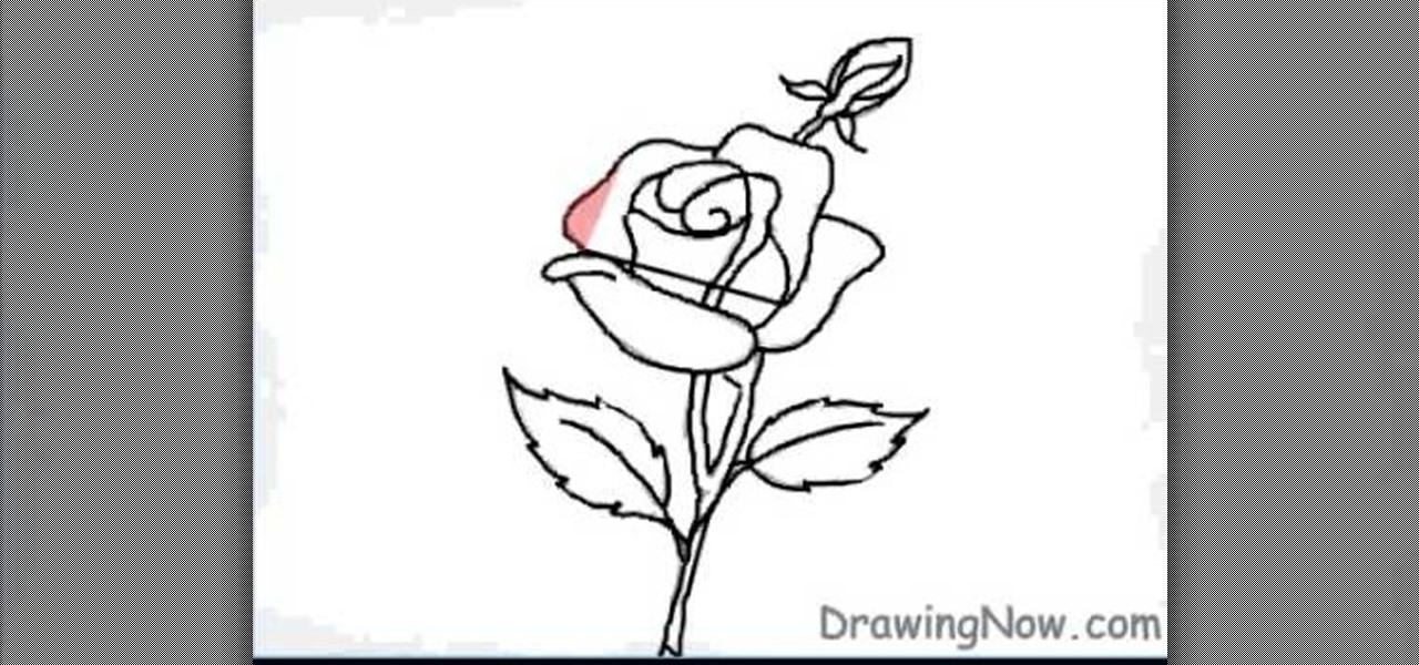 Drawn rose basic A How WonderHowTo to rose