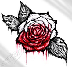 Drawn red rose bloody painter Rose roses roses you white