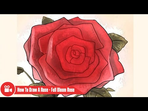Drawn red rose blooming rose A To Rose Bloom Rose