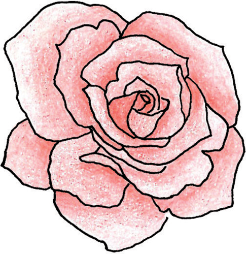 Drawn red rose blooming rose Library Clip Free Outline