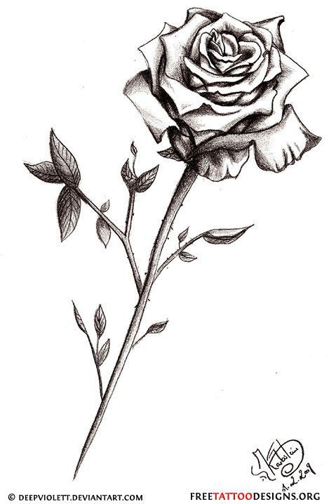 Drawn red rose blooming rose More best (make ideas tattoos