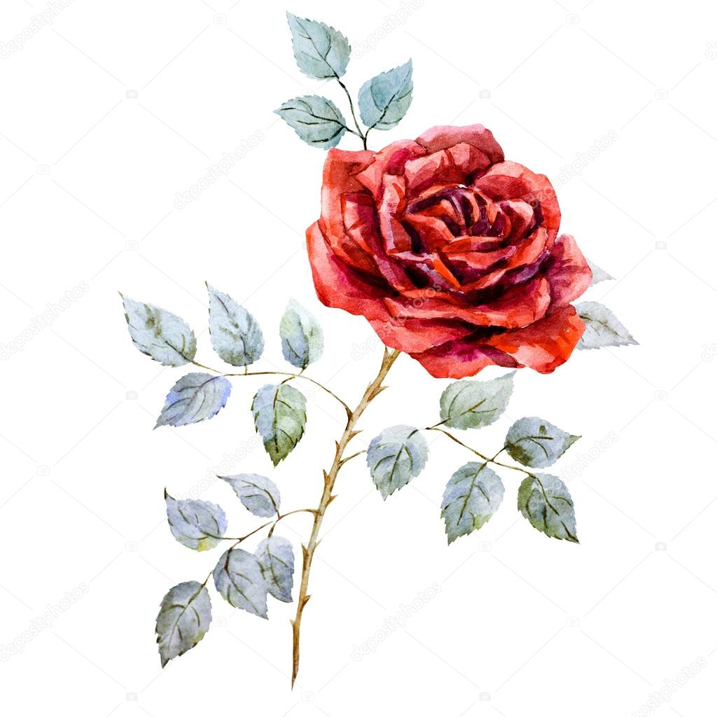 Drawn red rose branch Red rose red — #105809366