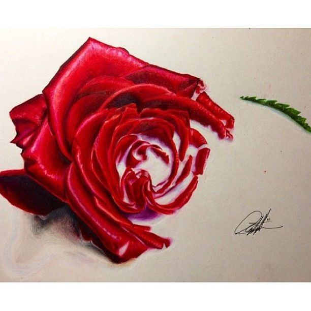 Drawn red rose color Rose #sketch Drawing Sketch #drawing