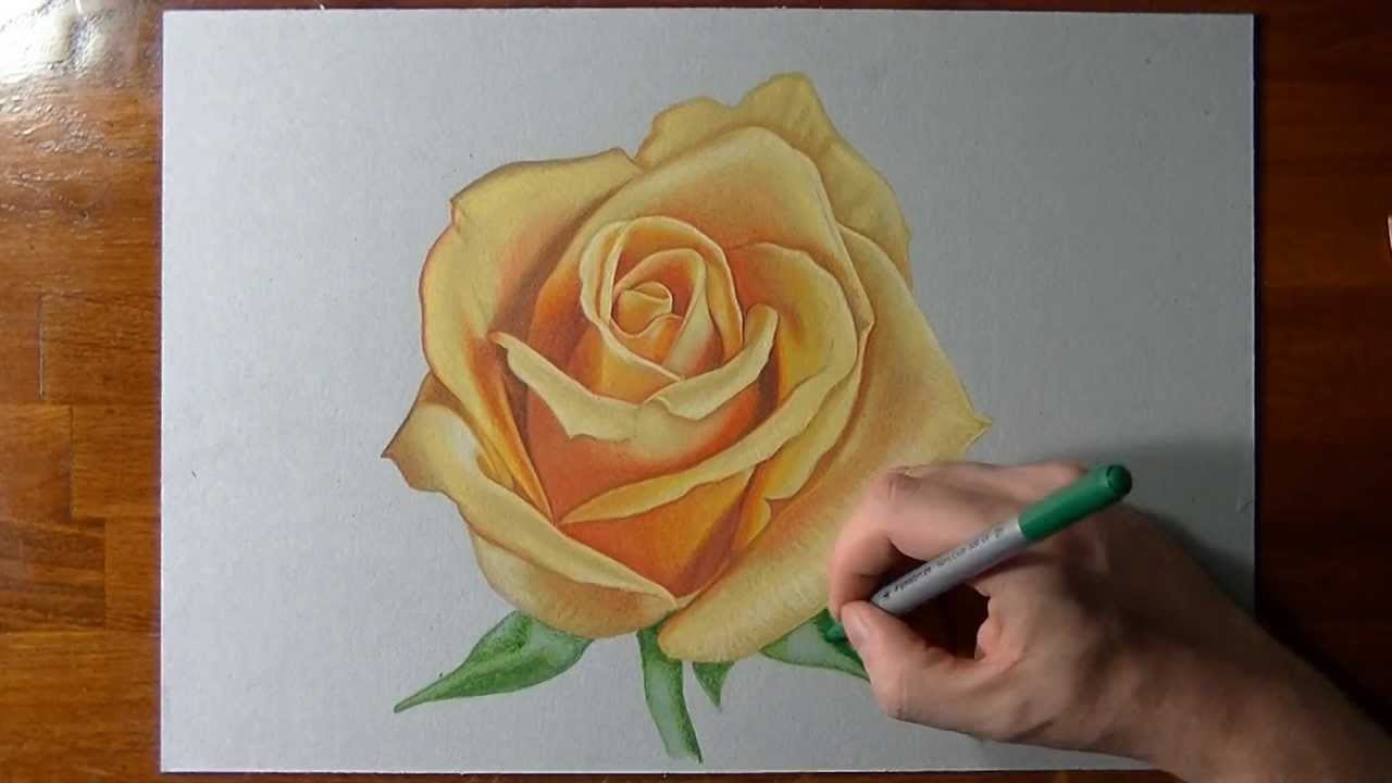 Drawn red rose color A rose to yellow