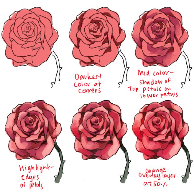Drawn red rose color Roses more Best  Drawing