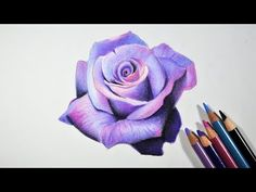 Drawn red rose color Explained Colored pencil Blending 10: