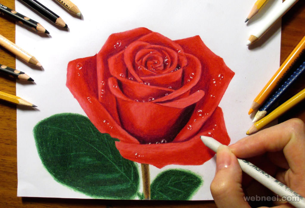 Drawn red rose color pencil JPG Drawings Color Rose For