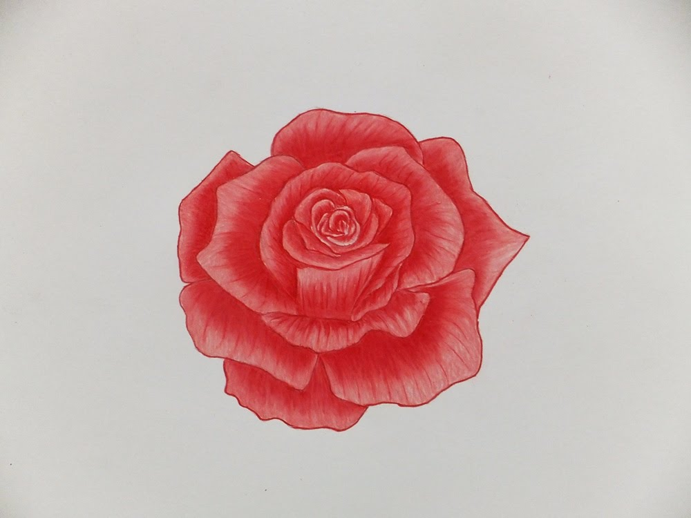 Drawn red rose color pencil YouTube Pencils How  A