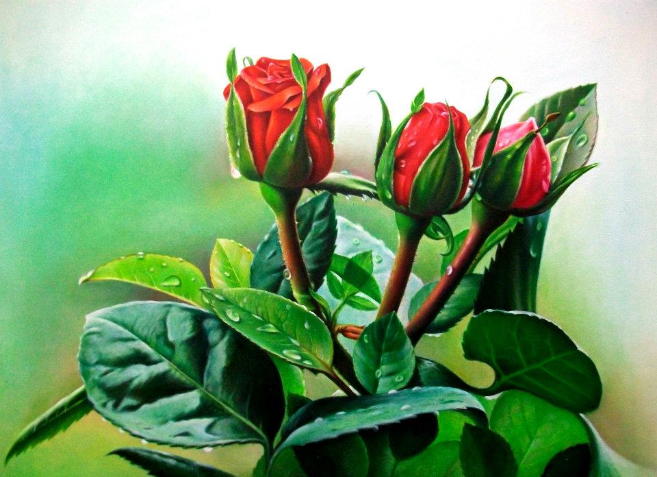 Drawn red rose color pencil Rose  Color With Drawings