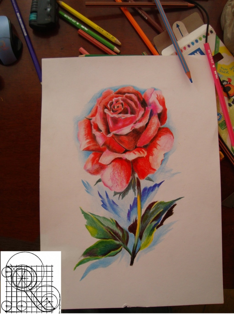 Drawn red rose color pencil In Robiartimre Drawing On Drawing
