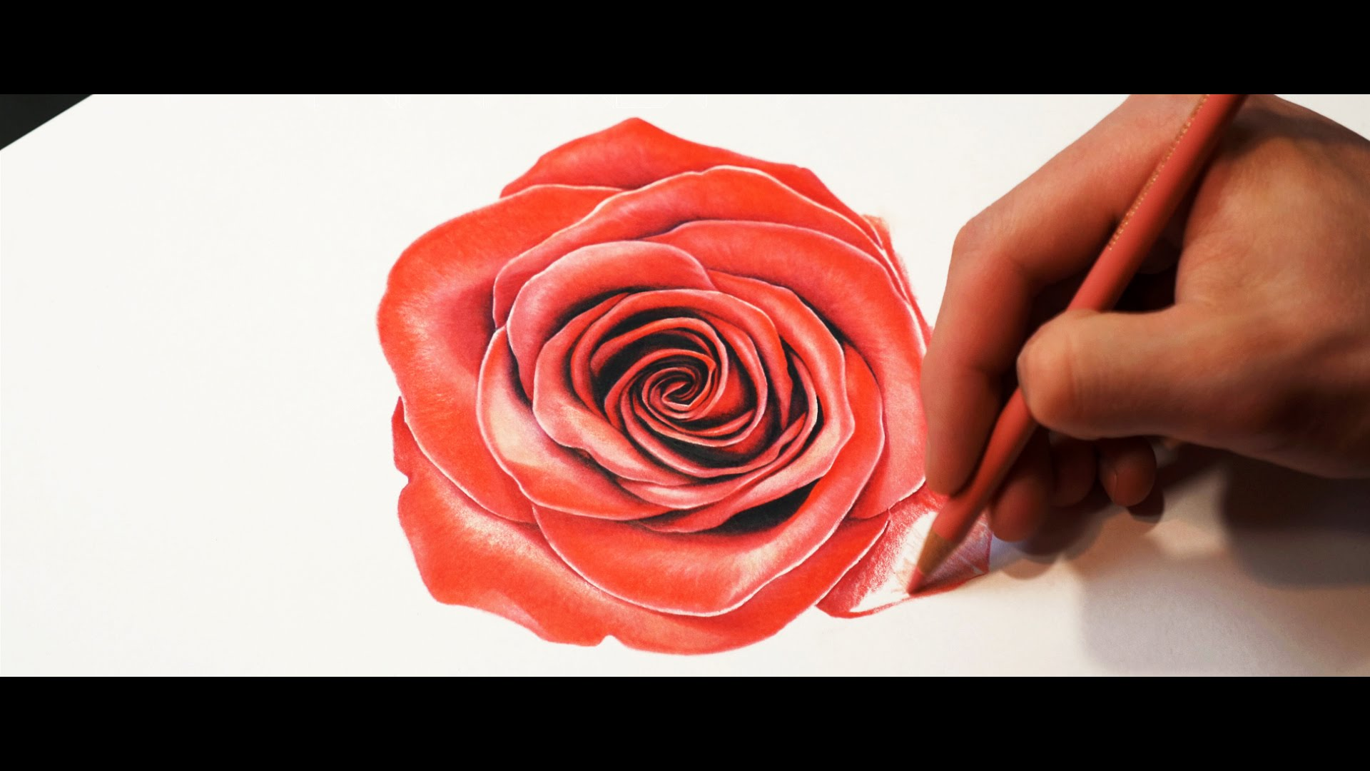 Drawn red rose color pencil YouTube Color Red Speed Rose