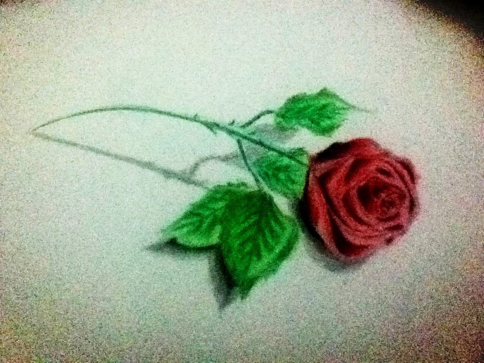 Drawn red rose color pencil  :) drawings pencil rose