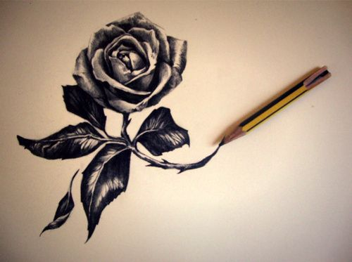 Drawn red rose complex 254 Rose Art images on