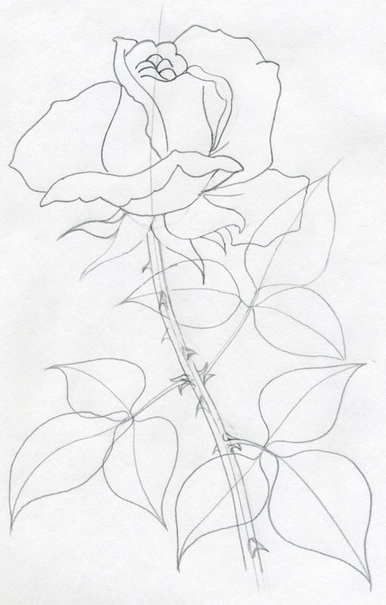 Drawn red rose complex Central can vein leaf You