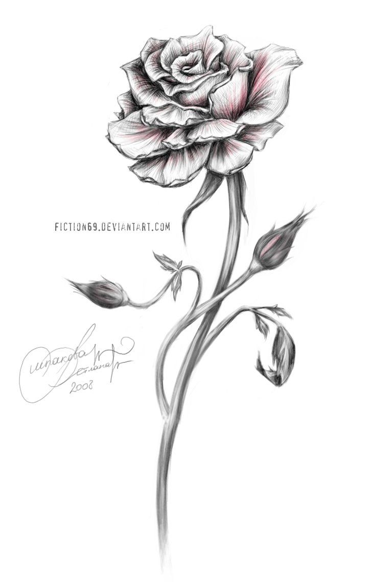 Drawn red rose dark red Else 25+ witout Best on