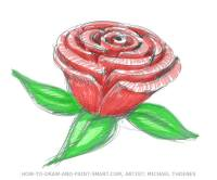 Drawn red rose detailed How Draw Red  a
