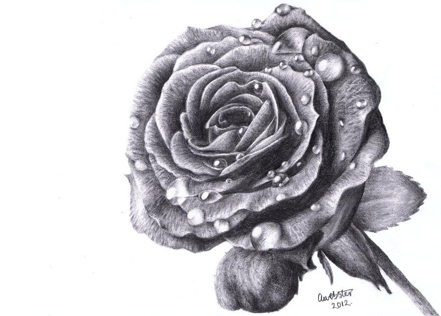 Drawn red rose deviantart Download Free on Drawings Art