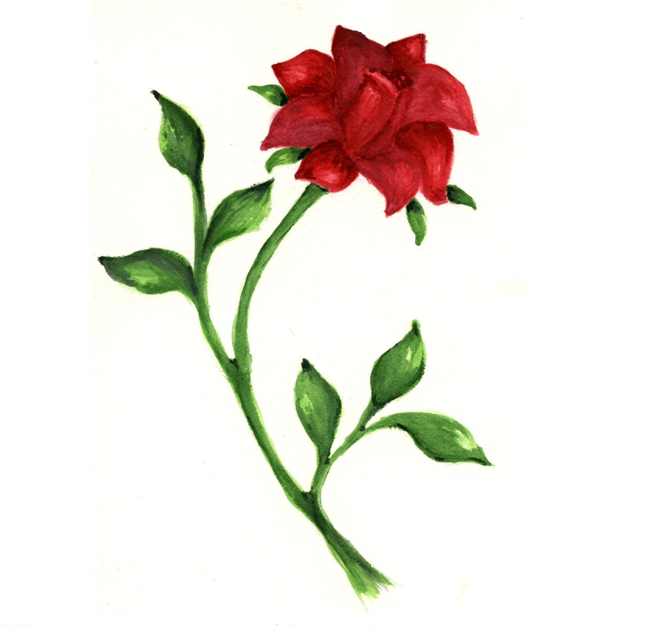 Drawn red rose disney princess  you drawn Which collectable