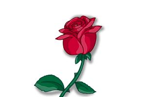 Drawn red rose drawed A Rose Draw an to