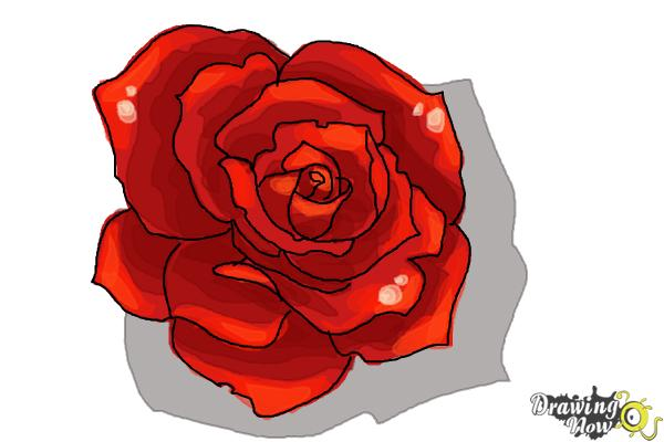 Drawn red rose drawed An Open Draw Rose to