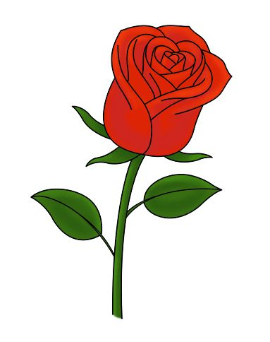 Drawn red rose easy On ideas Pinterest How 25+
