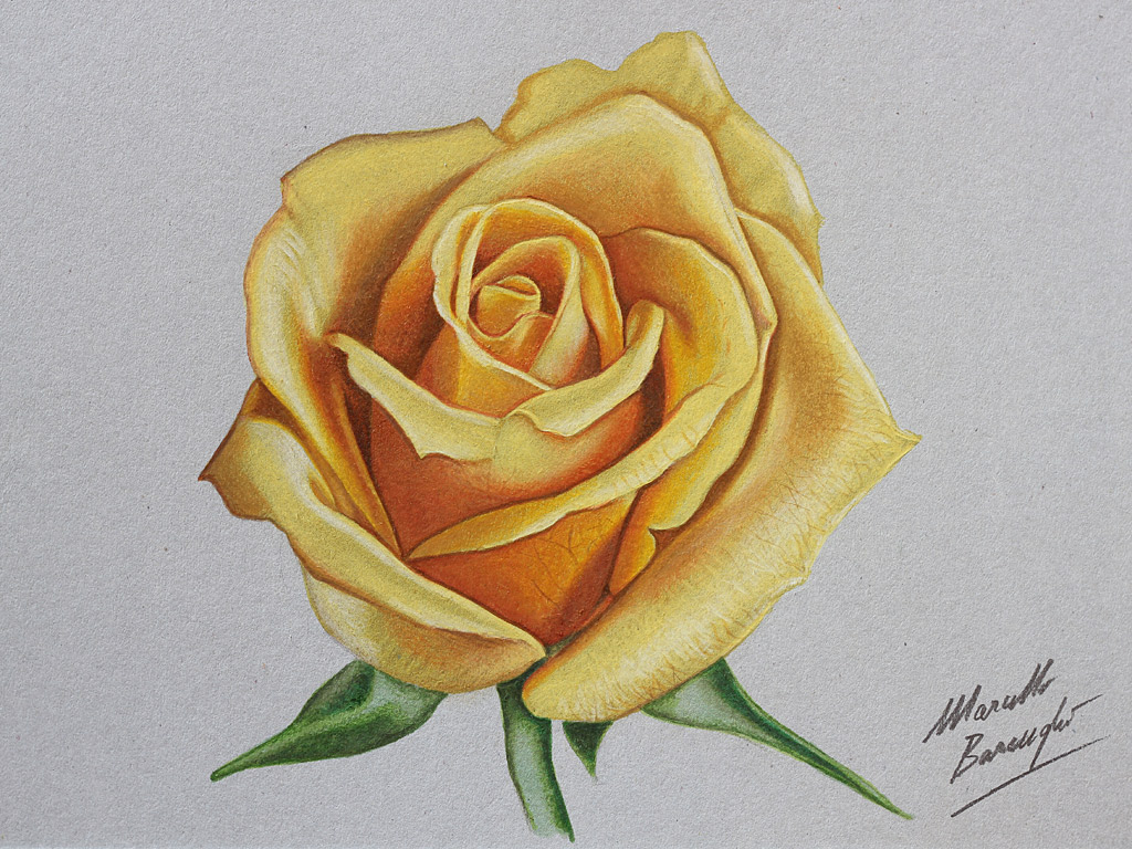 Drawn rose realistic Art Clip Red Free Roses