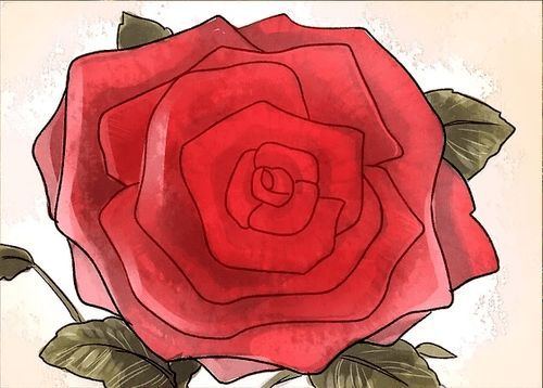 Drawn red rose fancy How Rose Pinterest draw Tutorials