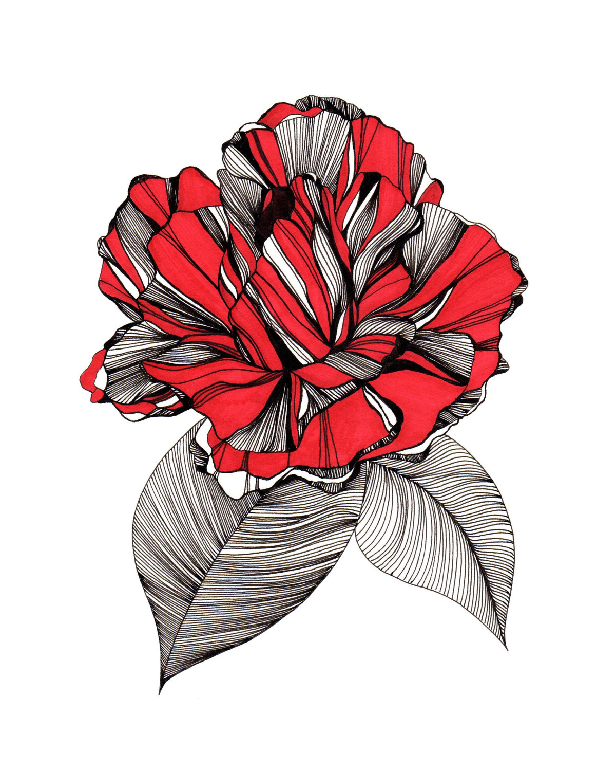 Drawn red rose flower abstract Print Unframed Drawing Drawing Red